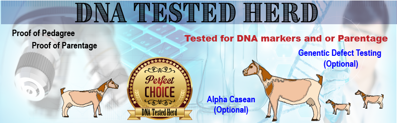 DNA Tested Herd